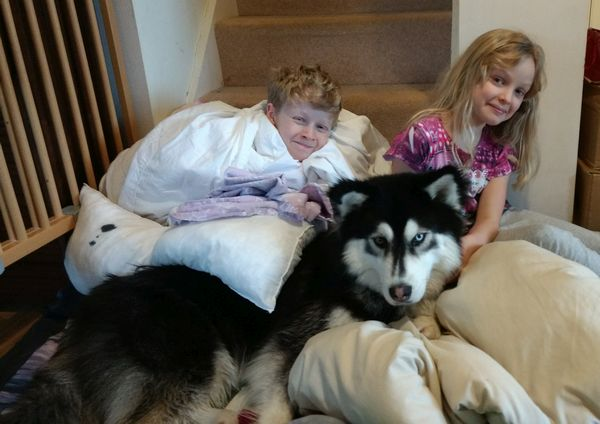 huskies are great with children